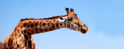 kkbite - girafe