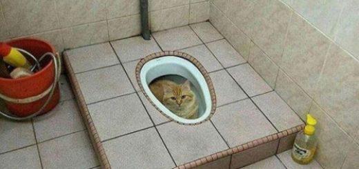 le chat dans les chiottes