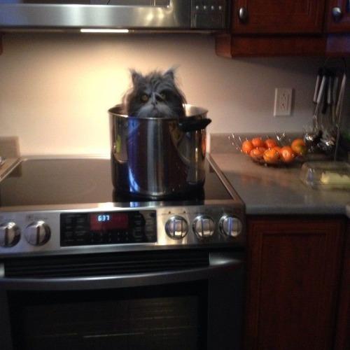 Soupe de chat