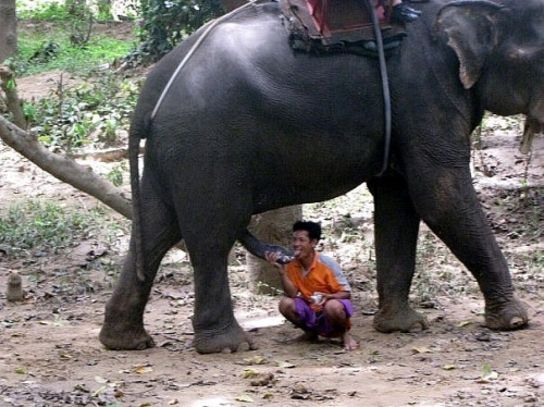 filipina-women-suck-elephant-dick-preggie-porn-thumbs